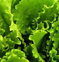 Салат - кладезь витаминов