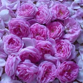 Напиток из роз
