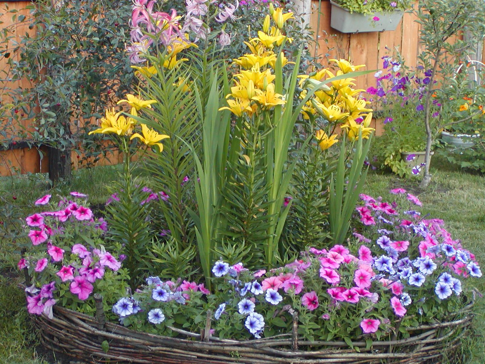 Какие цветы сажаем в июле 123