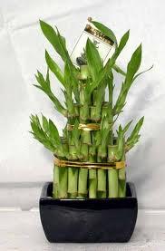 Бамбук-символ долголетия