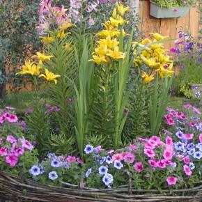 Цветы у Ольги