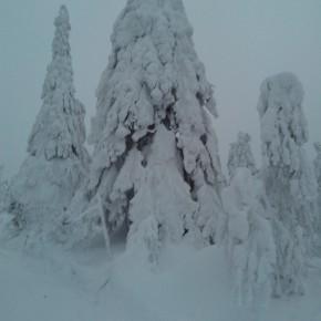 НА ПОлюде зимой